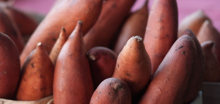 What rising US sweet potato consumption means for manufacturers – July 20, 2016